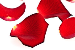 Rose Petals, isolated Stock Photos