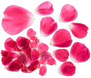 Rose Petals Isolated Royalty Free Stock Images
