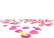 Rose petals on isolated background Royalty Free Stock Photography