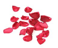 Rose petals isolated on white Royalty Free Stock Photography