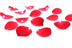 Rose petals isolated on white Stock Photo