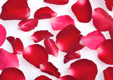 Rose petals isolated on white background Royalty Free Stock Photos