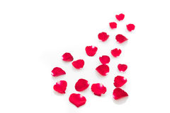Rose petals isolated on white Royalty Free Stock Photo
