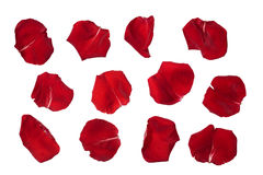 Rose petals isolated on white stock photos