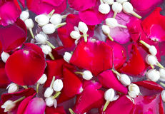 Rose petals and jasmine water. Stock Images