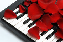 Rose petals on keyboard. Red rose petals scattered on black and white piano keyboard Royalty Free Stock Photo