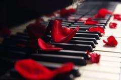 Rose petals on keys. Rose petals on piano keys royalty free stock images
