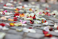 Rose petals laying at the ground Royalty Free Stock Images