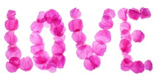 Rose petals love Stock Image