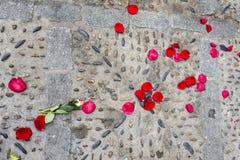 Rose petals. Rose petals lying on the floor stock image