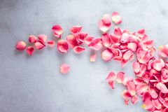 Rose petals on marble stone, floral background stock photo
