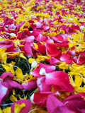Rose petals and marigold petals Royalty Free Stock Images