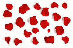 Rose petals. A number of rose petals on white surface royalty free stock photography