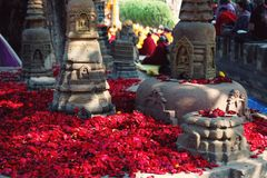 Rose petals for offering respect. Bodh Gaya, India. Red rose-petals for showing the reverence appropriate to a pilgrimage-place. Numerous small rose petals for Stock Photo