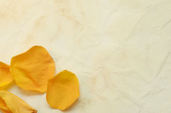 Rose petals on the old paper background Stock Photo