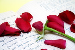 Rose petals on the old script. Over yellow background stock image