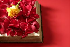 Rose petals over old aged book Royalty Free Stock Photo
