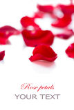 Rose petals over white Royalty Free Stock Photography
