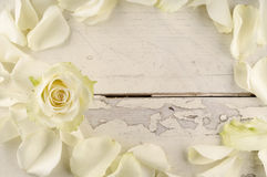 Rose and petals over wooden background. Royalty Free Stock Images