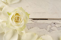 Rose and petals over wooden background. Holiday greeting card stock images
