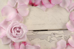Rose and petals over wooden background. Stock Photos