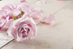 Rose and petals over wooden background. Stock Photo