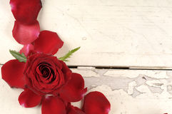 Rose and petals over wooden background. Royalty Free Stock Photo
