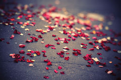 Rose petals on a pavement Stock Photos
