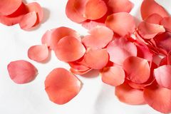 Rose petals. Pile of the red rose petals stock images