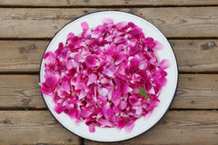 Rose petals on the plate. Pink rose petals on the plate Stock Photos
