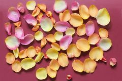 Rose petals on red background royalty free stock photography