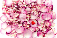 Rose petals and red heart backgrund. Pink rose petals background with tiny red heart on it stock photography
