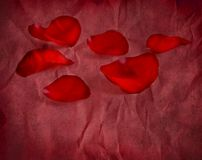 Rose Petals on Red Paper Stock Photography