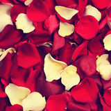 Rose petals in retro style Royalty Free Stock Images