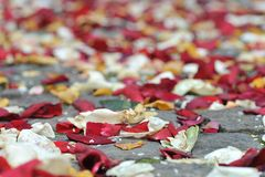 Rose petals and rice Stock Photography