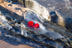 Rose petals on a rock at the ocean Royalty Free Stock Photos