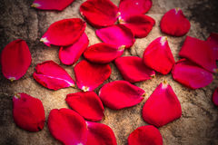 Rose petals on the rocks Stock Image