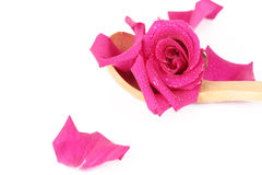 Rose-petals and rose Stock Photography