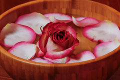 Rose petals and rose in bowl with water Royalty Free Stock Photo