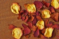 Rose Petals sèche Image stock