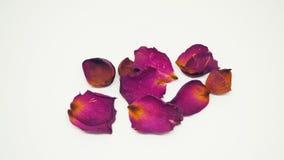 Rose Petals sèche Pétales de Rose roses 01 valentine photo stock