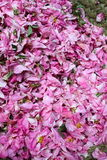Rose petals for sale Stock Photography