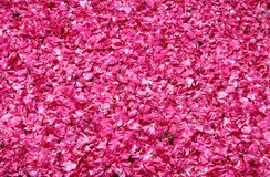 Rose petals for sale. In a market stall stock photos