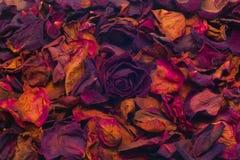 Rose Petals secca Fotografia Stock Libera da Diritti