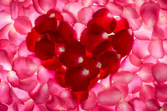 Rose. Petals shape is heart on white background. Give  to darling in valentine's day. or send love to marry stock image