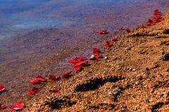 Rose Petals On Shoreline Stock Image
