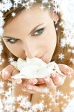 Rose petals with snowflakes #2. Lovely woman in christmas spa smelling white rose petals royalty free stock photos