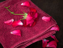Rose petals spa Royalty Free Stock Photos