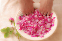 The rose petals spa bath Stock Images