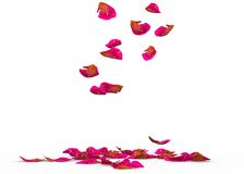Rose petals speckled fall on the floor Royalty Free Stock Photos